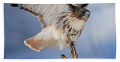 Beach Towel featuring the photograph Red Tail Hawk Perch by Bill Wakeley