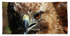 Beach Sheet featuring the photograph Red-tail Hawk Portrait by Anthony Jones