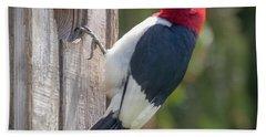 Red-headed Woodpecker 2018  Beach Sheet
