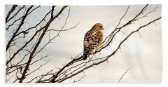 Red-tailed Hawk Beach Sheet