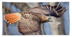 Beach Towel featuring the photograph Red Tailed Hawk Flying by Bill Wakeley