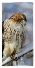 Red Tailed Hawk, Glamour Pose Beach Towel
