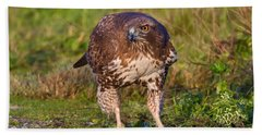 Red-tailed Hawk Hunting Bugs Beach Sheet