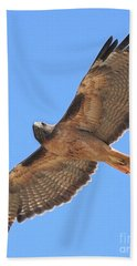 Red Tailed Hawk In Flight Beach Sheet