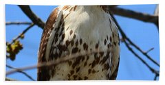 Red-tailed Hawk Beach Sheet