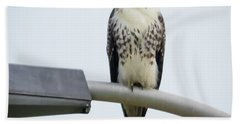 Beach Towel featuring the photograph Red-tailed Hawk Looking At Me by Ricky L Jones