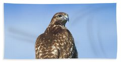 Red-tailed Hawk Perched Looking Back Over Shoulder Beach Towel
