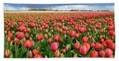 Red Tulip Field Beach Sheet