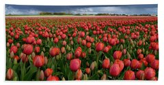 Red Tulips Field Beach Sheet by Mihaela Pater