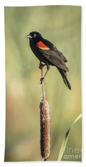 Beach Towel featuring the photograph Red-wing On Cattail by Robert Frederick