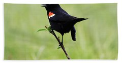 Red Winged Blackbird Beach Towel by Alyce Taylor
