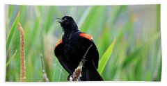 Red-winged Blackbird At Miner's Marsh, Nova Scotia Beach Towel