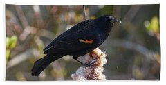 Beach Towel featuring the photograph Red-winged Blackbird On Cattail Reed by Sharon Talson