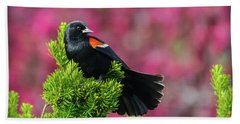 Red Winged Blackbird With Crabapple Blossoms Beach Sheet