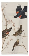 Red Winged Starling Or Marsh Blackbird Beach Towel by John James Audubon