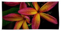 Red/yellow Plumeria In Bloom Beach Towel