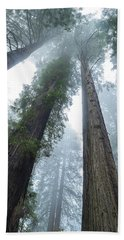 Redwood Giants California Coast Beach Towel