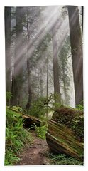 Redwood Light Beach Sheet