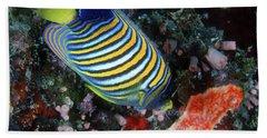 Regal Angelfish, Great Barrier Reef Beach Sheet