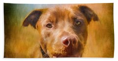 Rescued Chocolate Lab Portrait Beach Towel
