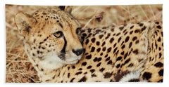 Resting Cheetah, Close-up  Beach Sheet by Nick Biemans