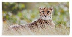 Resting Cheetah Beach Sheet