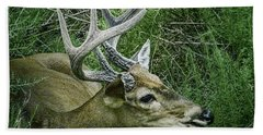 Beach Towel featuring the photograph Resting Male Deer by Melissa Messick