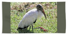Resting Wood Stork Beach Sheet by Carol Groenen