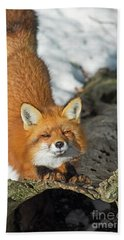 Beach Towel featuring the photograph Reynard The Fox by Nina Stavlund