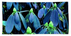 Rhododendron Buds In Spring Beach Sheet