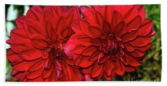 Beach Towel featuring the photograph Rich Red Dahlias By Kaye Menner by Kaye Menner