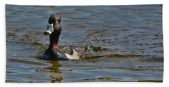 Ring Necked Duck Beach Towel