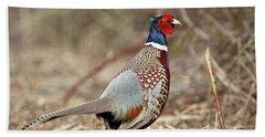 Ring-necked Pheasant Stony Brook New York Beach Sheet