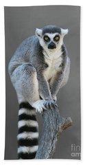 Ring-tailed Lemur #6 V2 Beach Towel