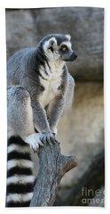 Ring-tailed Lemur #7 Beach Towel