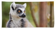 Ring-tailed Lemur Closeup Beach Towel