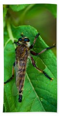 Robber Fly 1 Beach Towel