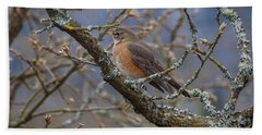 Robin In A Tree Beach Towel