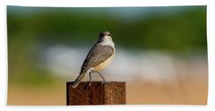 Rock Wren 1 Beach Towel