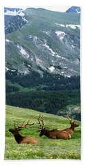 Beach Towel featuring the photograph Rocky Mountain Elk 5 by Marie Leslie