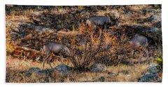 Rocky Mountain National Park Deer Colorado Beach Sheet