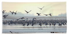 Beach Towel featuring the photograph Roosting On The Platte by Susan Rissi Tregoning