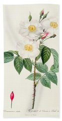 Rosa Damascena Subalba Beach Towel