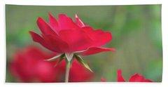 Rose 4 Beach Sheet