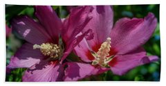Rose Of Sharon Hibiscus Beach Towel