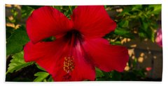 Rose Of Sharon Beach Towel