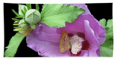 Rose Of Sharon With Sleepy Orange Butterfly Beach Towel