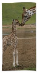 Beach Towel featuring the photograph Rothschild Giraffe Giraffa by San Diego Zoo