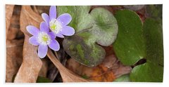 Round-lobed Hepatica Beach Sheet
