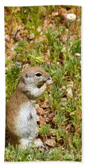 Round-tailed Ground Squirrel Beach Towel